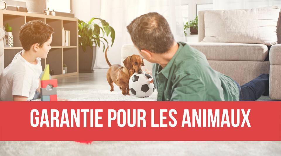 garantie pour les animaux dans les assurances habitation
